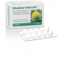 Rhodiola-Intercell® 60 kapsułek Różeniec Górski Magnez Witamina D Witaminy z grupy B